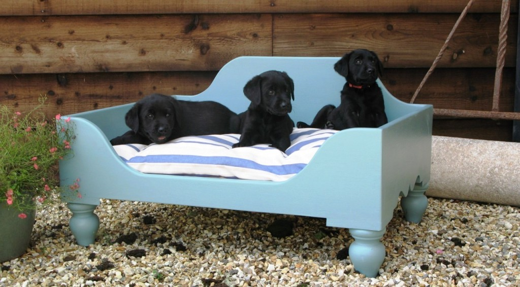 Cool-Dog-Beds