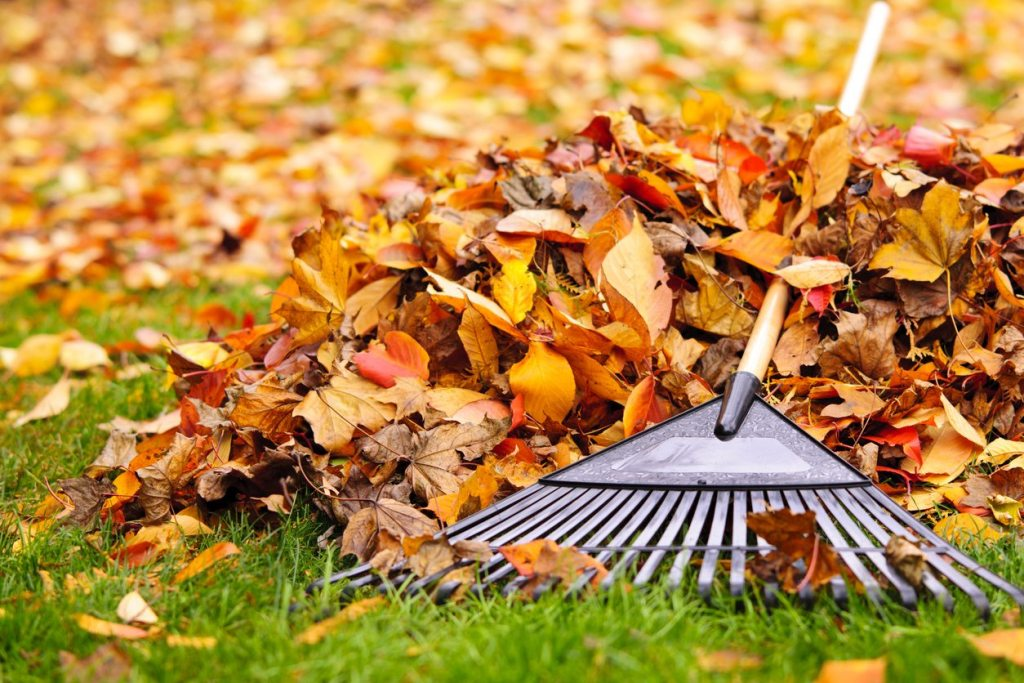 Rake Out Leaves