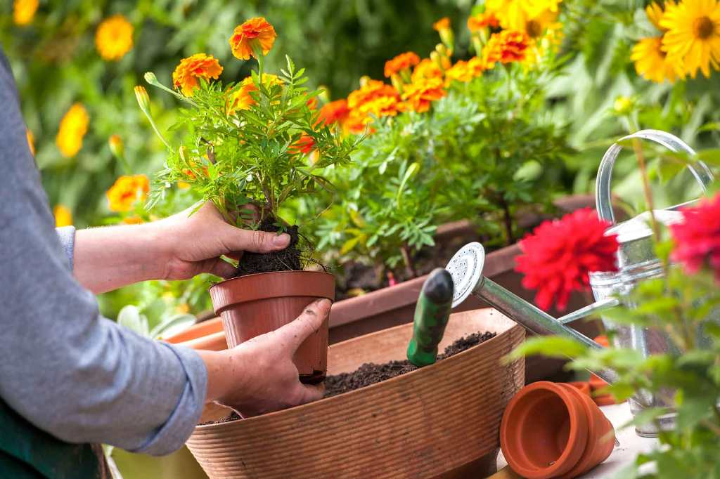 Think Ahead In Planting