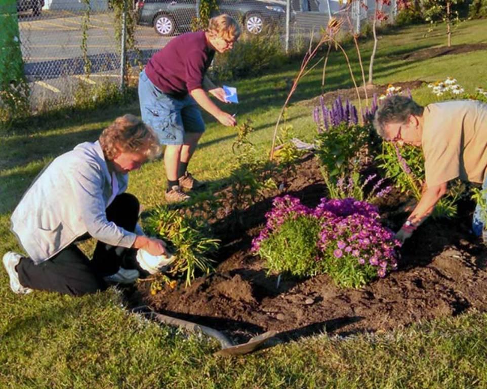 Planting a pollinator garden