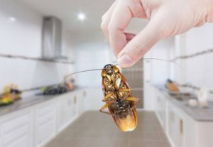 Effective Ways to Remove Roaches From Your Kitchen