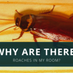 Why are There Roaches in My Room?