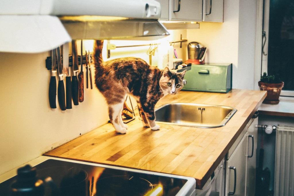 Make Your Kitchen Safe