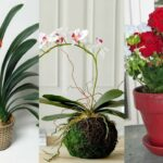 6 Flowering Indoor Plants to Enhance The Beauty Quotient Of The Interiors