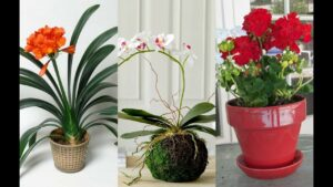 6 Flowering Indoor Plants to Enhance The Beauty Quotient Of The Interiors