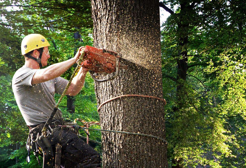 Tree Service Provider