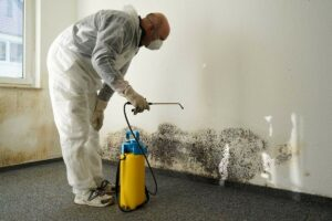 Top 5 Things to Keep in Mind When Hiring a Mold Specialist