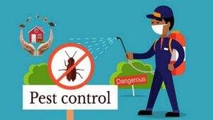 Pest Control 101: A Comprehensive to-Do List When Going for Extermination