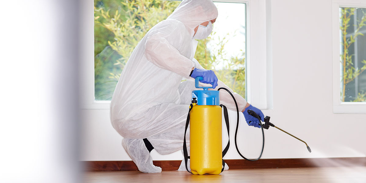 Reputable Mold Removalists Won't Push You but Will Educate You
