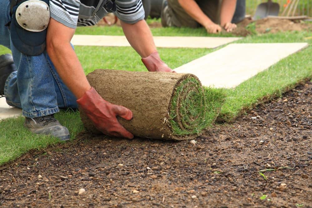 Tips on seeding