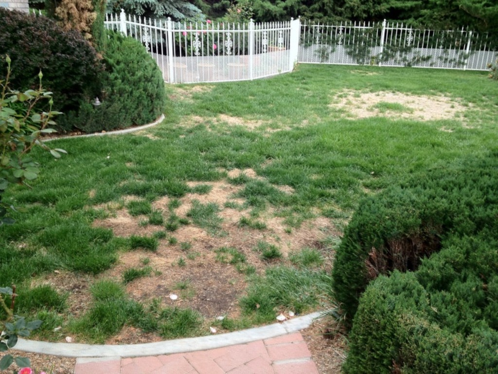 Fill Out a Patchy Lawn