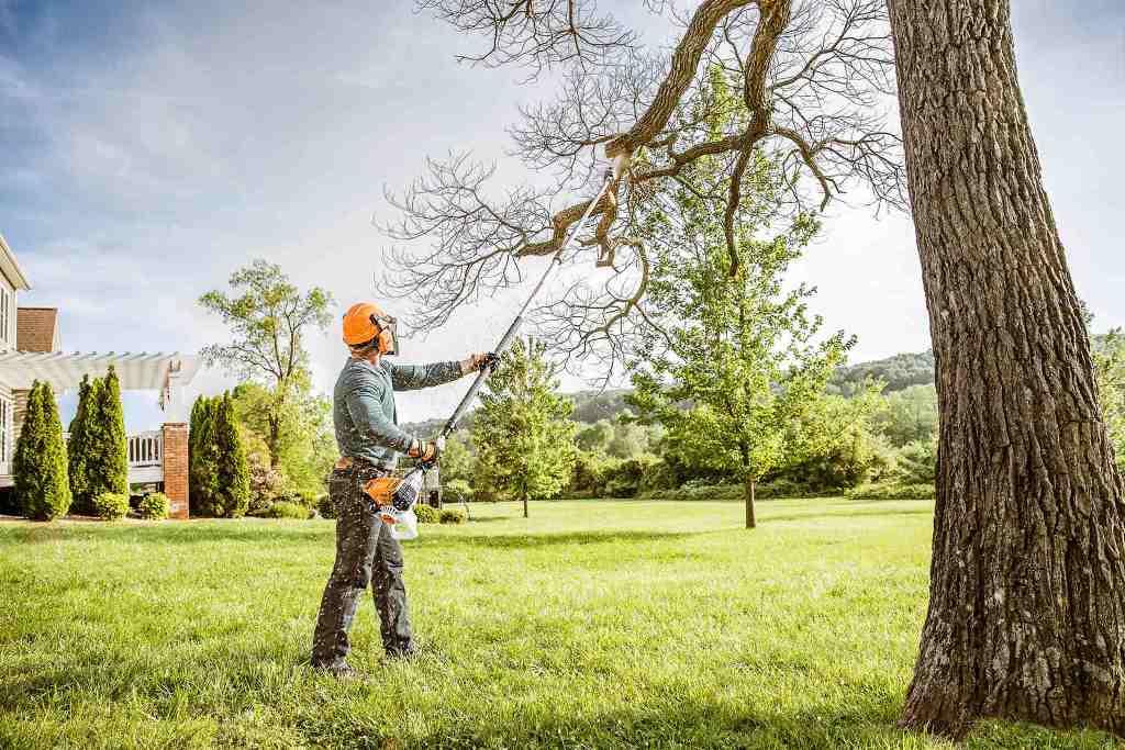Your Tree's Needs