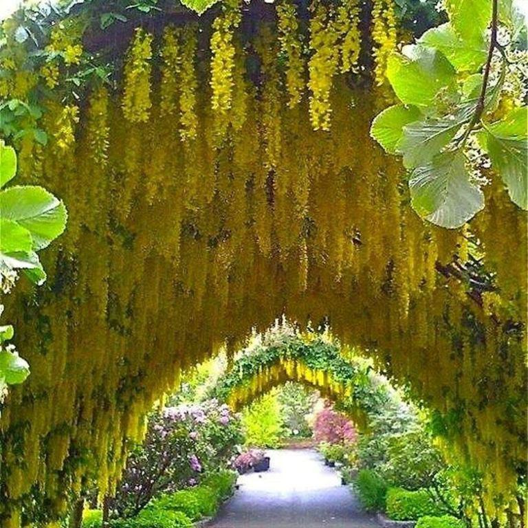 Golden Chain Trees