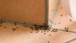 7 Effective Ways to Get Rid of Home Pests for Good