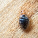 New Furniture Nightmare: Can a Furniture Store Be Held Liable For Giving You Bed Bugs?