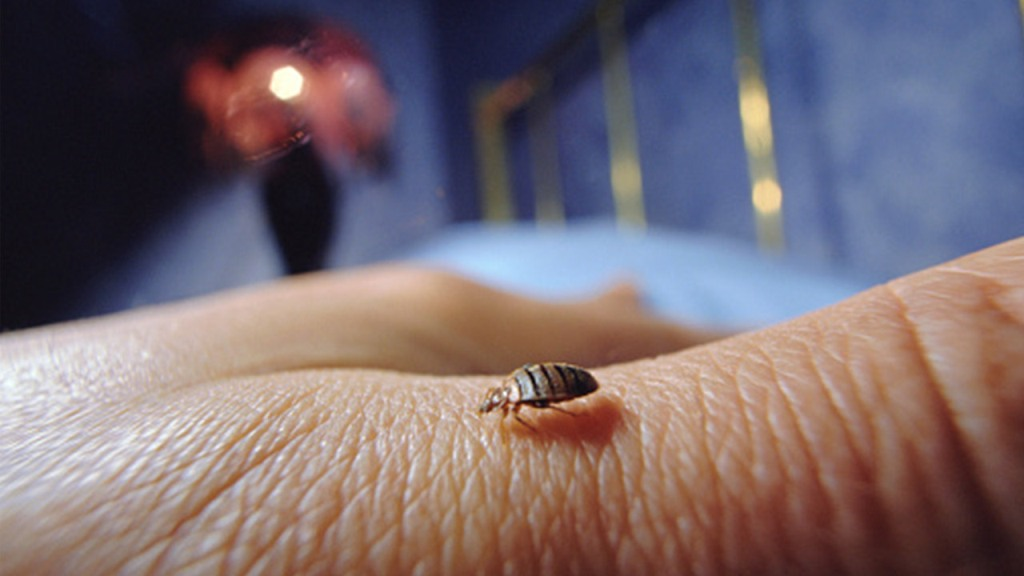 What Should I Do if I Have Bed Bugs