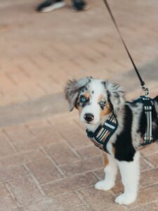 9 Tips On What to Look For When Choosing a Harness For Your Dog