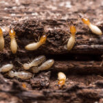 Eight Ideal Tips When it Comes to DIY Termite Control