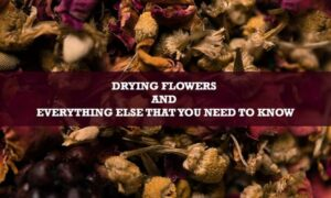 Drying Flowers and Everything Else That You Need to Know