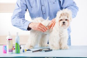 Grooming Your Dog at Home