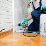 Pest Control: The Importance of Keeping Common Pests at Bay