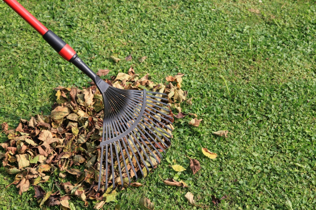 Cleaning up Your Yard