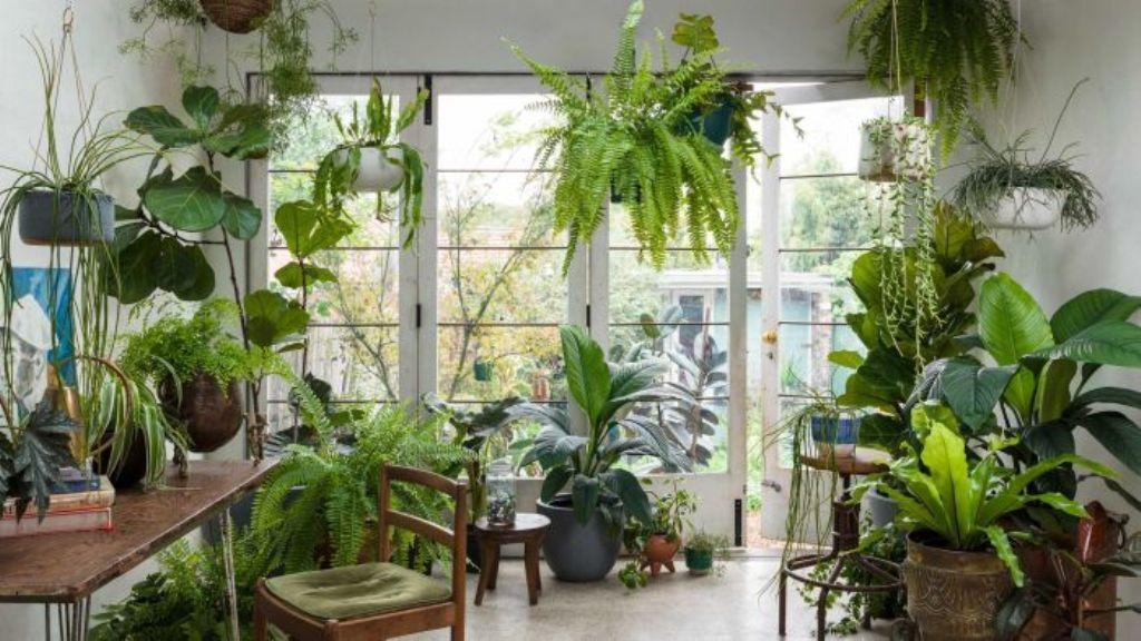 Invest in Indoor Plants