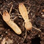 Watch Out For Termites In Spring