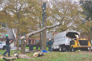 What to Look for While Hiring a Tree Service Company