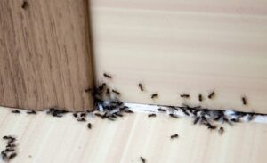 Pests Found in Your Home