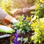 Cleaning and maintaining your garden for the summer