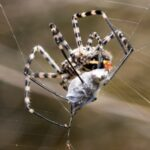 6 Tips for Safer Insects and Spider Control