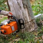 Tree Removal: 6 Danger Signs