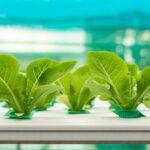 Gardening Tips: Aquaponics VS Hydroponics