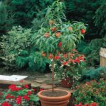 Fast Growing Trees You Can Plant In Your Garden