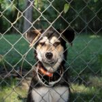 How to Keep Your Landscape Design Dog-Friendly