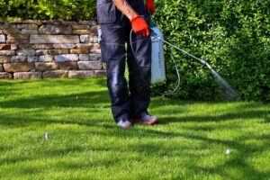 How to Improve Your Landscape and Protect it During Quarantine
