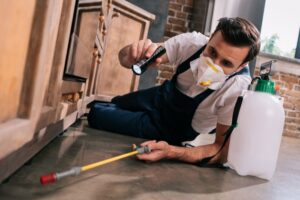 Ways to Get Rid of Your Pest Nightmare