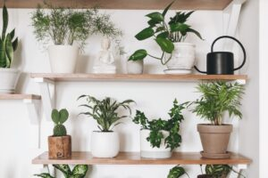 6 Plants That Are The Most Helpful For Your Home
