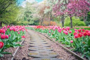 Essential Garden Care Equipment for a Beautiful Lawn