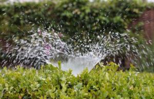 Unveiling Best Garden Irrigation Techniques