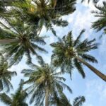 4 Signs A Palm Tree Should Be Removed From Your Garden