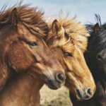3 Things You Need To Know About CBD oil for Horses