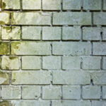 When is the Right Time to Hire a Professional To Remove Molds at Home