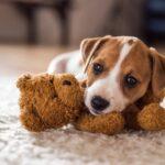 A Handy Home Improvement Checklist For A New Pet Dog