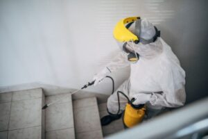 Why You Should Also Include Pest Control in the Renovation Process