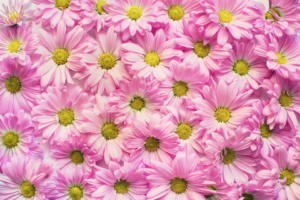 6 Plants You Can Easily Take Care Of In Your Garden