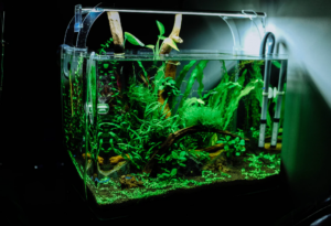 6 Excellent Tips That Will Improve Your Aquarium Maintenance Skills