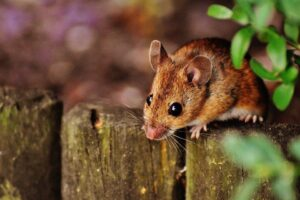 Common Household Pests You Need to Be Aware Of