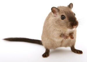 Common House Pests You Need to Look Out For